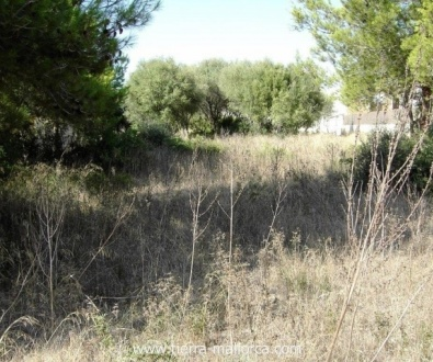 The plot is located near to Palma as well as within easy reach from a couple of golf courses.